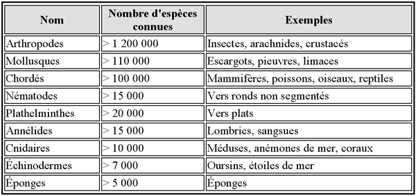 Embranchements du règne animal